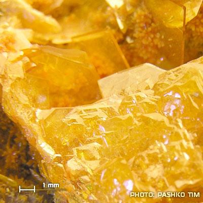 фотография минерала Вульфенит
