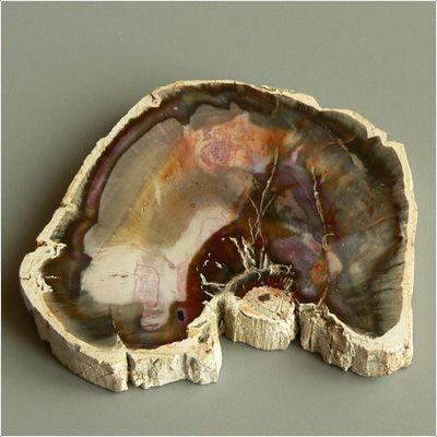 фотография минерала Окаменелое Дерево