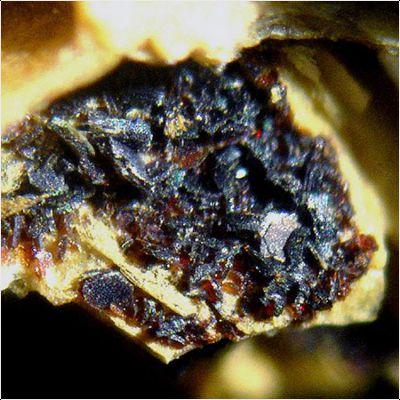 фотография минерала Диксенит