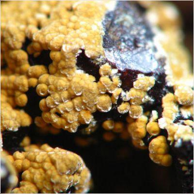 фотография минерала Меуригит-Na