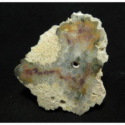 фотография Коралл окварцованный природноокрашенный