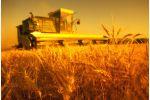 Нанопорошки металлов повышают урожайность сельскохозяйственных культур