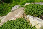Какие камни выбрать для альпийской горки