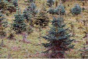 «Башнефть» высадила 3,4 миллиона деревьев в Башкирии и Тюменской области
